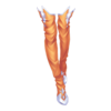 https://www.eldarya.hu/assets/img/item/player//icon/3e2abaa9ae2f79641f48620ee50137a9~1512996935.png
