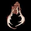 https://www.eldarya.hu/assets/img/item/player//icon/d6af2c086822bb929891ecd1d0b16474~1508745830.png