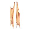 https://www.eldarya.hu/assets/img/item/player/icon/00e8b2a0fd3d70e5f68fcc70469f21c6.png