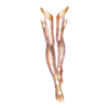 https://www.eldarya.hu/assets/img/item/player/icon/b31e0ffb628c45bfb717a0c6a7656caf.png
